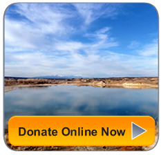 Together we can make a critical difference, Donate Now